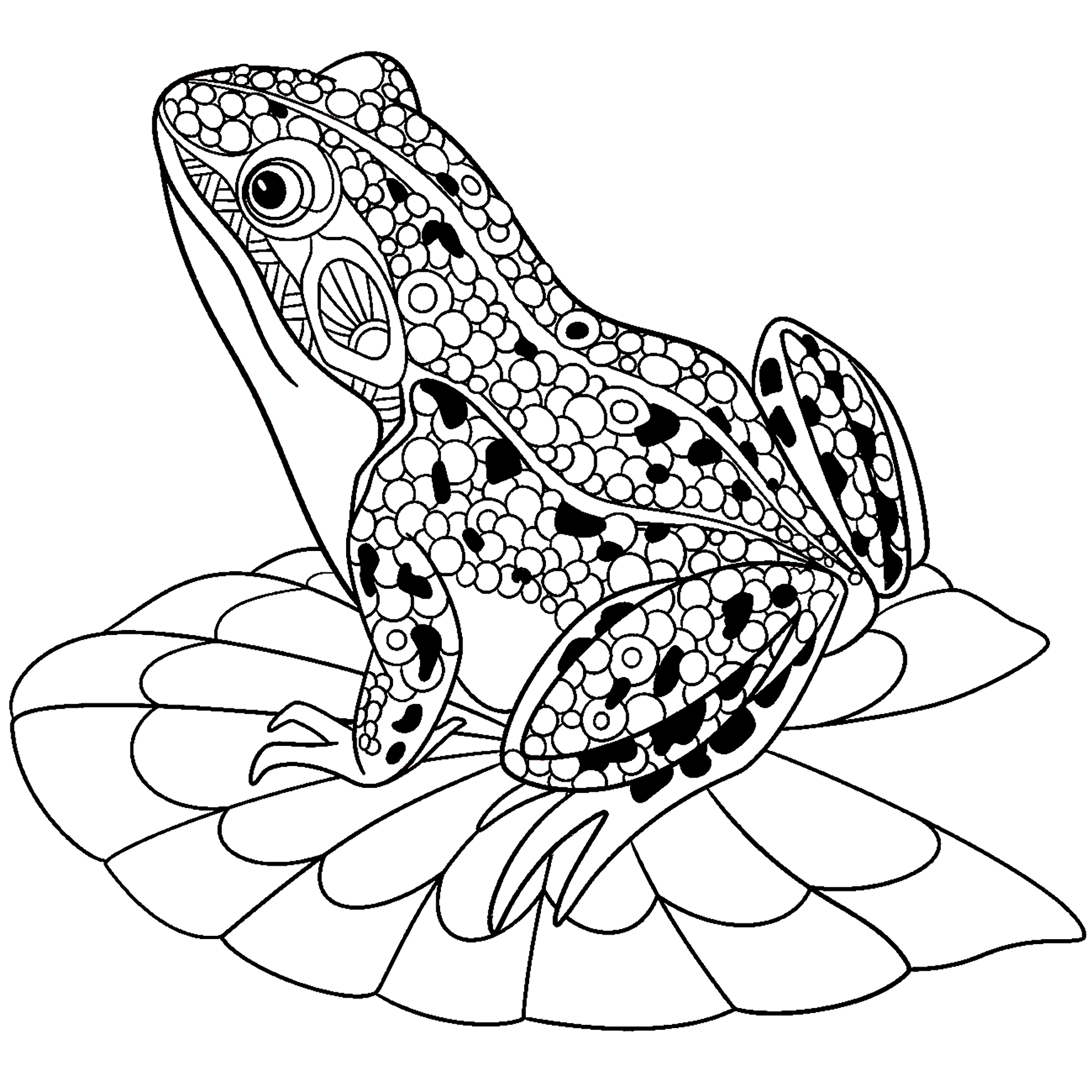 coloring images of frog realistic frog coloring pages free download on clipartmag frog images of coloring