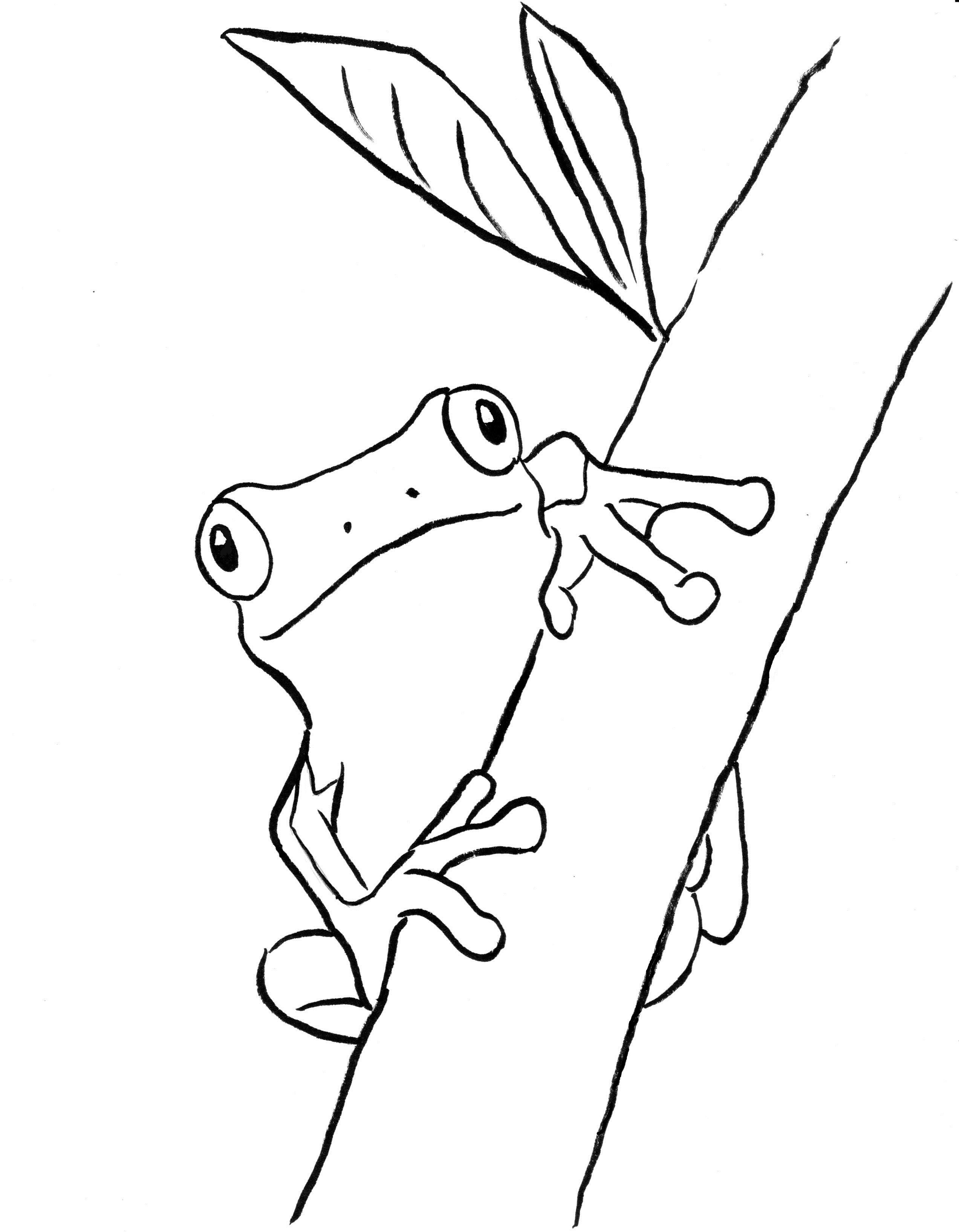 coloring images of frog tree frog coloring page art starts frog coloring of images