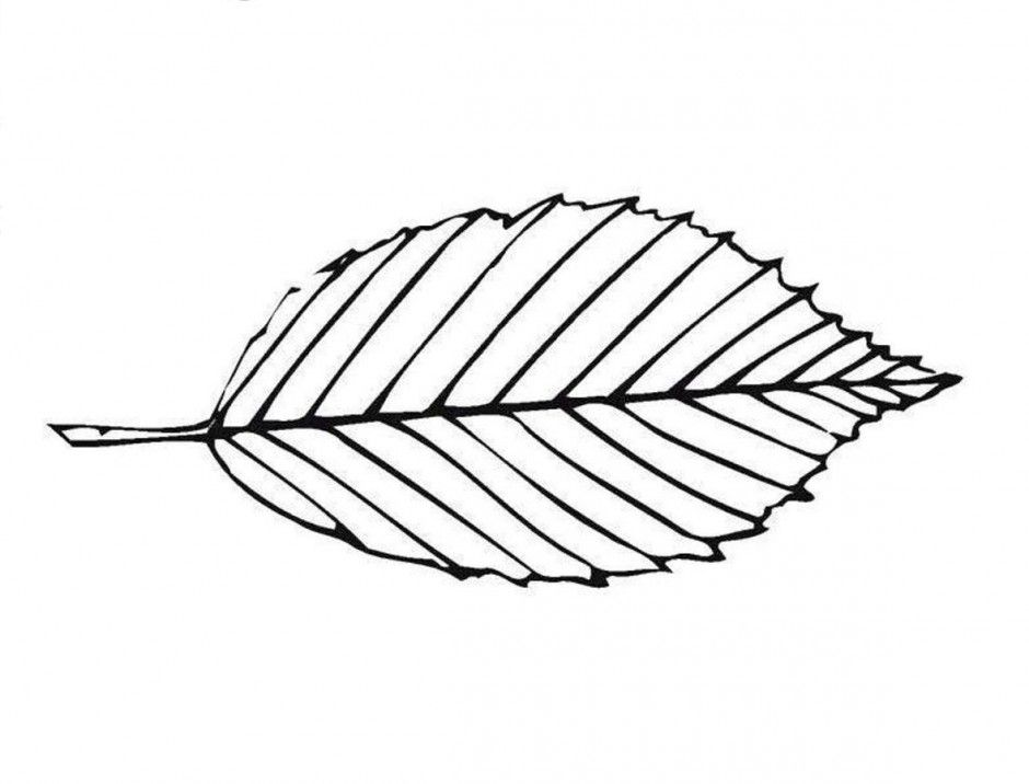 coloring leaf clip art flower leaves coloring pages download and print for free coloring art leaf clip