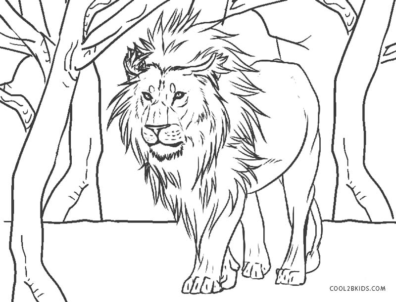 coloring lion pages free printable lion coloring pages for kids lion coloring pages