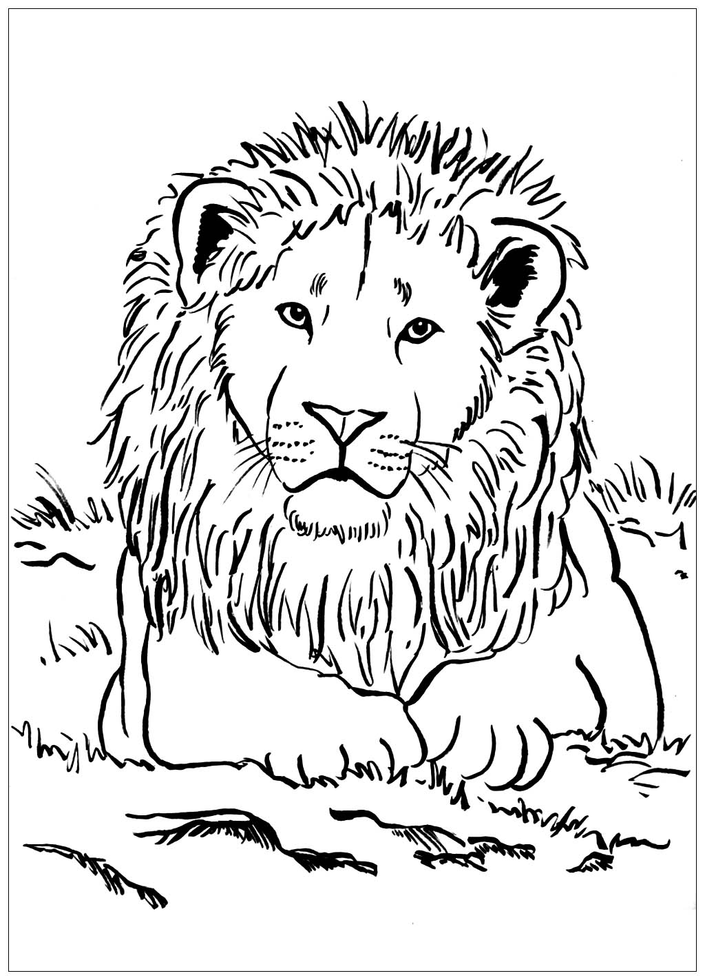 coloring lion pages lion colour drawing at getdrawings free download lion coloring pages