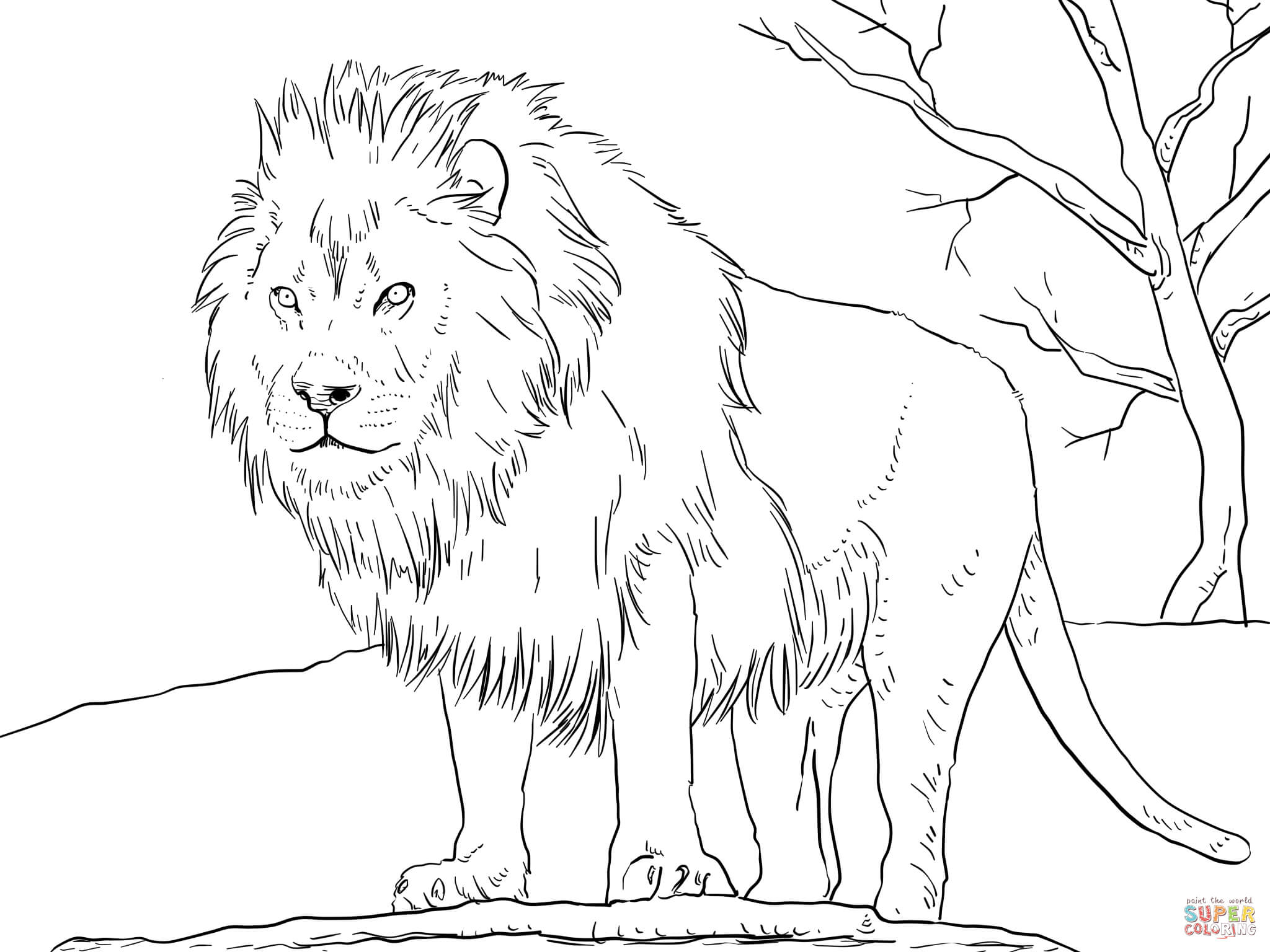 coloring lion pages male african lion coloring page free printable coloring pages coloring lion