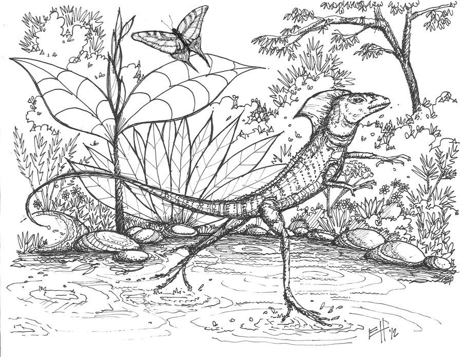 coloring lizard free lizard coloring pages lizard coloring 1 1