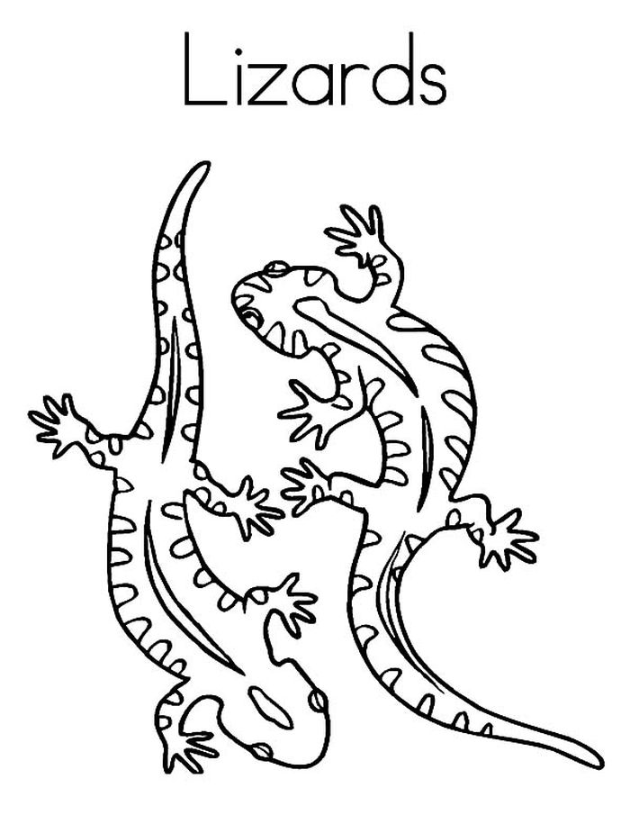 coloring lizard lizard coloring pages kiddo lizard coloring