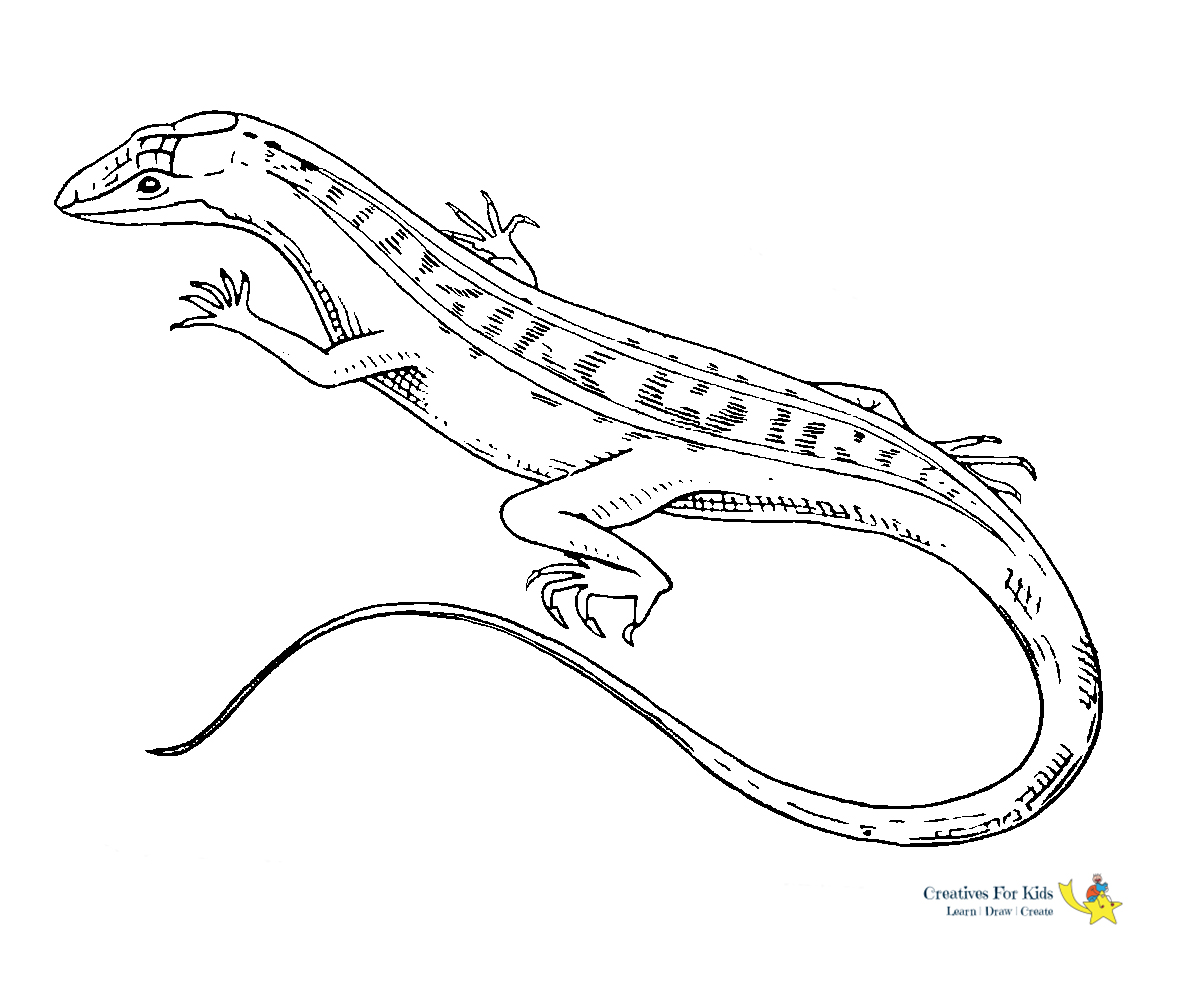 coloring lizard lizard coloring pages to download and print for free coloring lizard