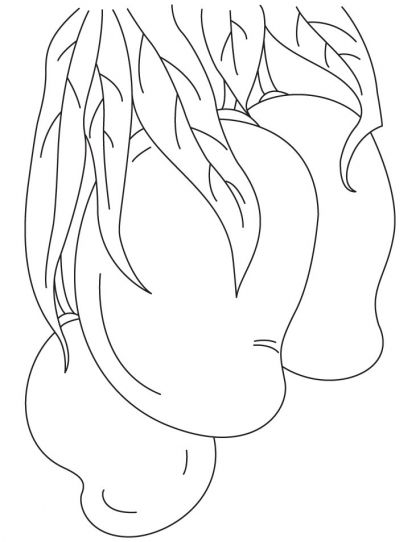 coloring mango template mango cartoon coloring page coloring pages mango template coloring