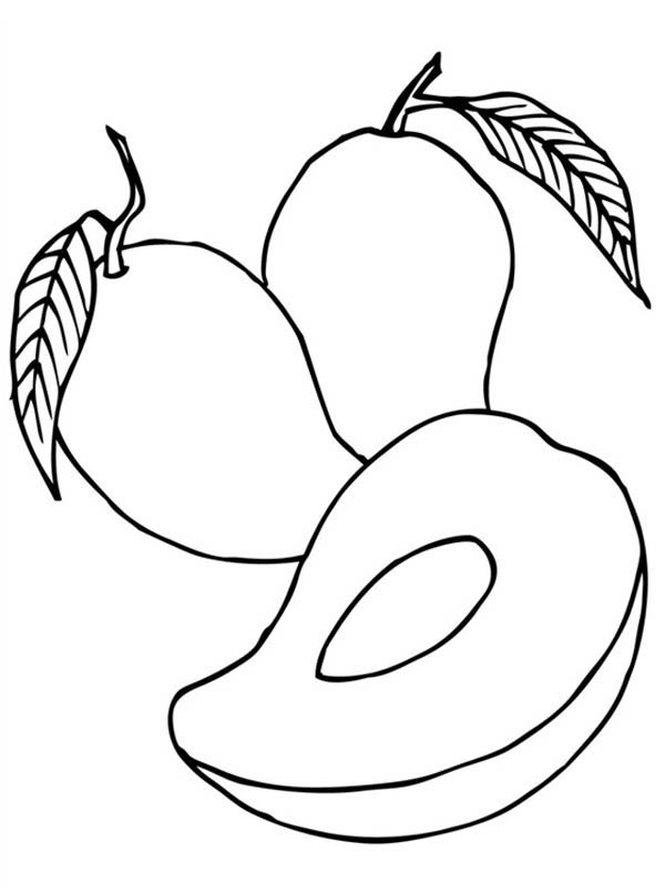 coloring mango template mango fruit coloring pages template coloring pages template coloring mango