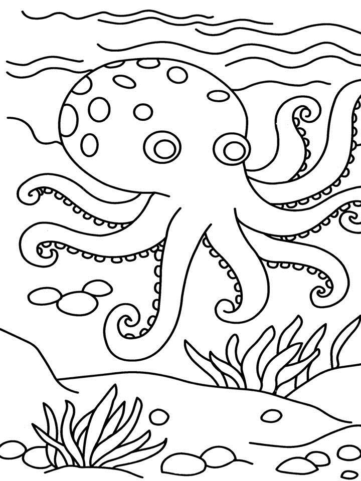 coloring octopus colour octopus coloring page octopus coloring page family colour coloring octopus