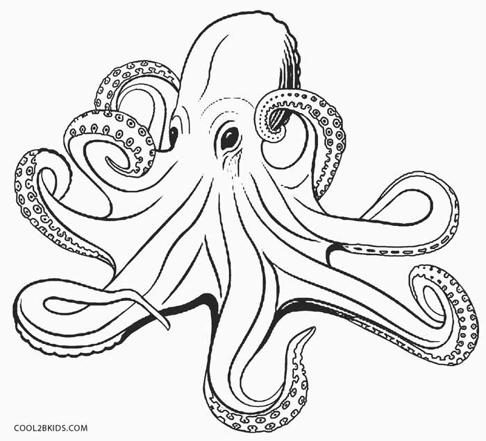 coloring octopus colour octopus coloring pages kiddo colour coloring octopus