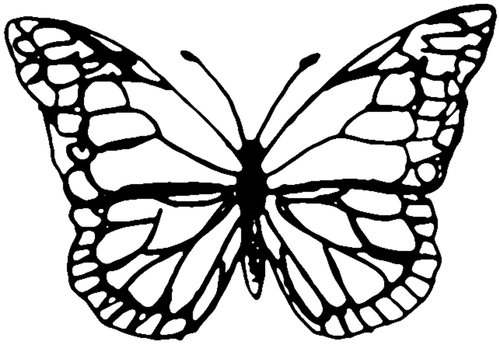 coloring outline butterfly best butterfly outline 1174 clipartioncom outline butterfly coloring