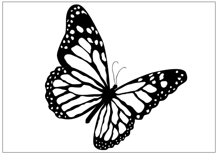 coloring outline butterfly butterfly clip art black and white clipart panda free outline butterfly coloring