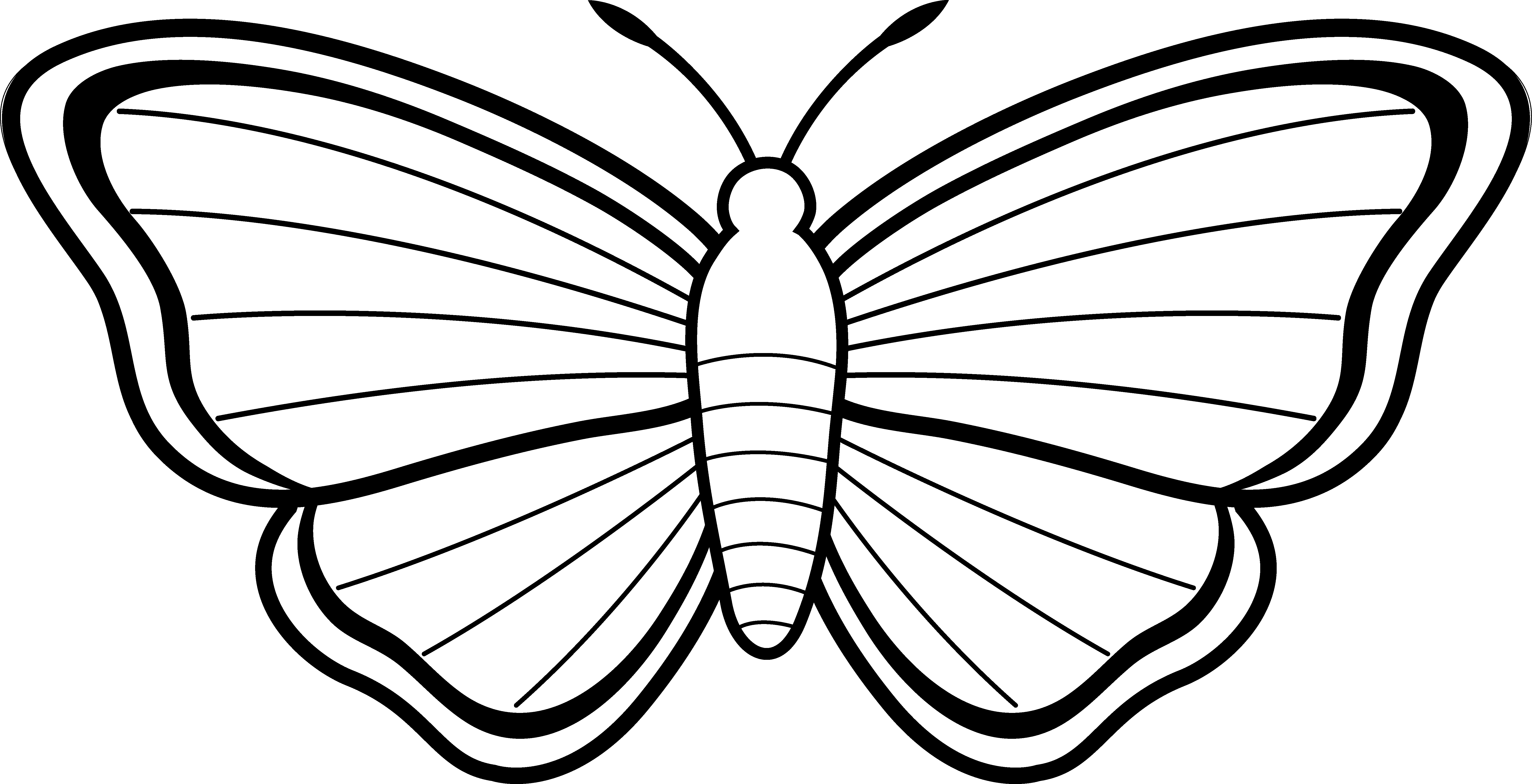 coloring outline butterfly butterfly outline free download on clipartmag outline butterfly coloring