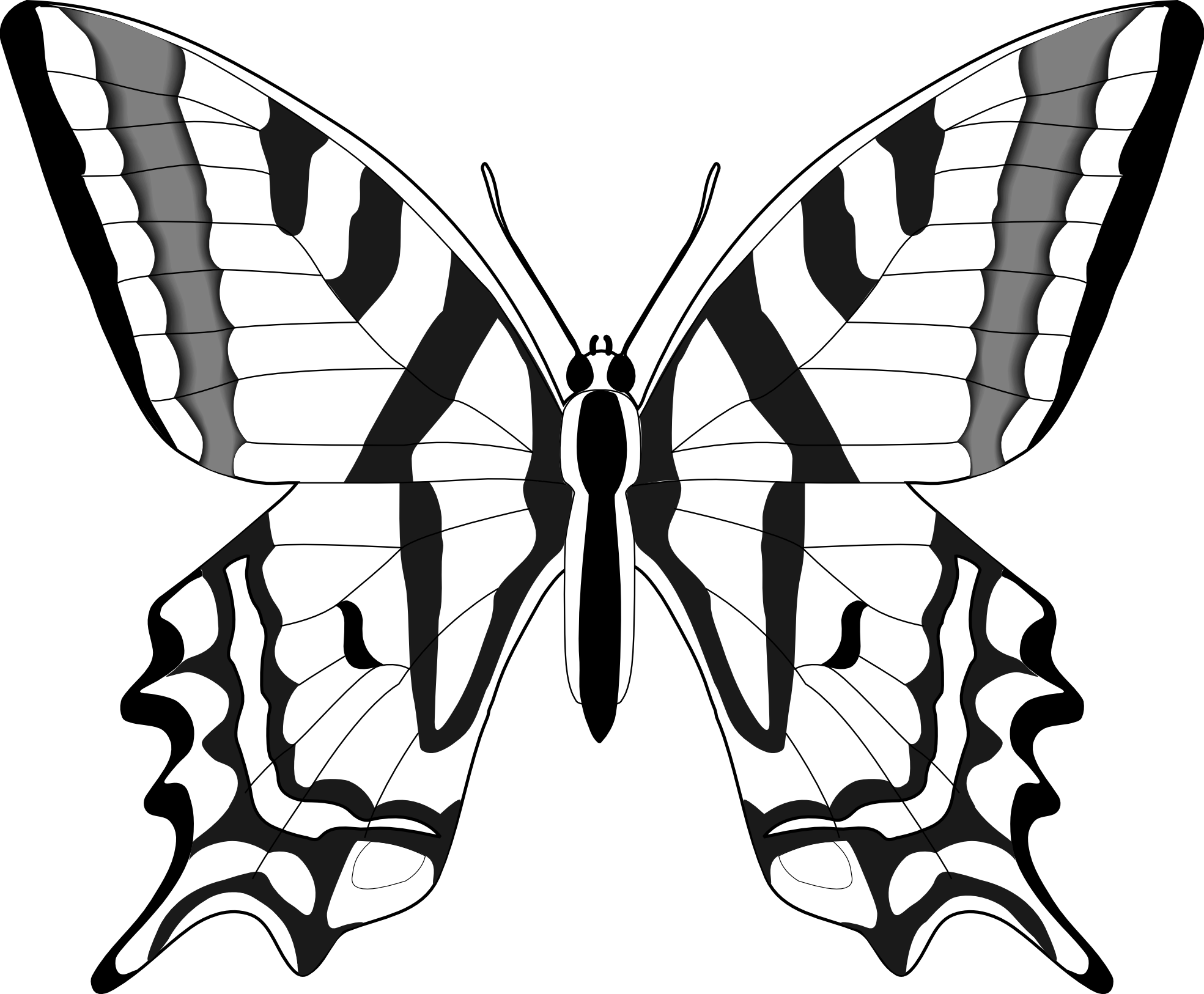 coloring outline butterfly butterfly outline printable coloring home butterfly coloring outline