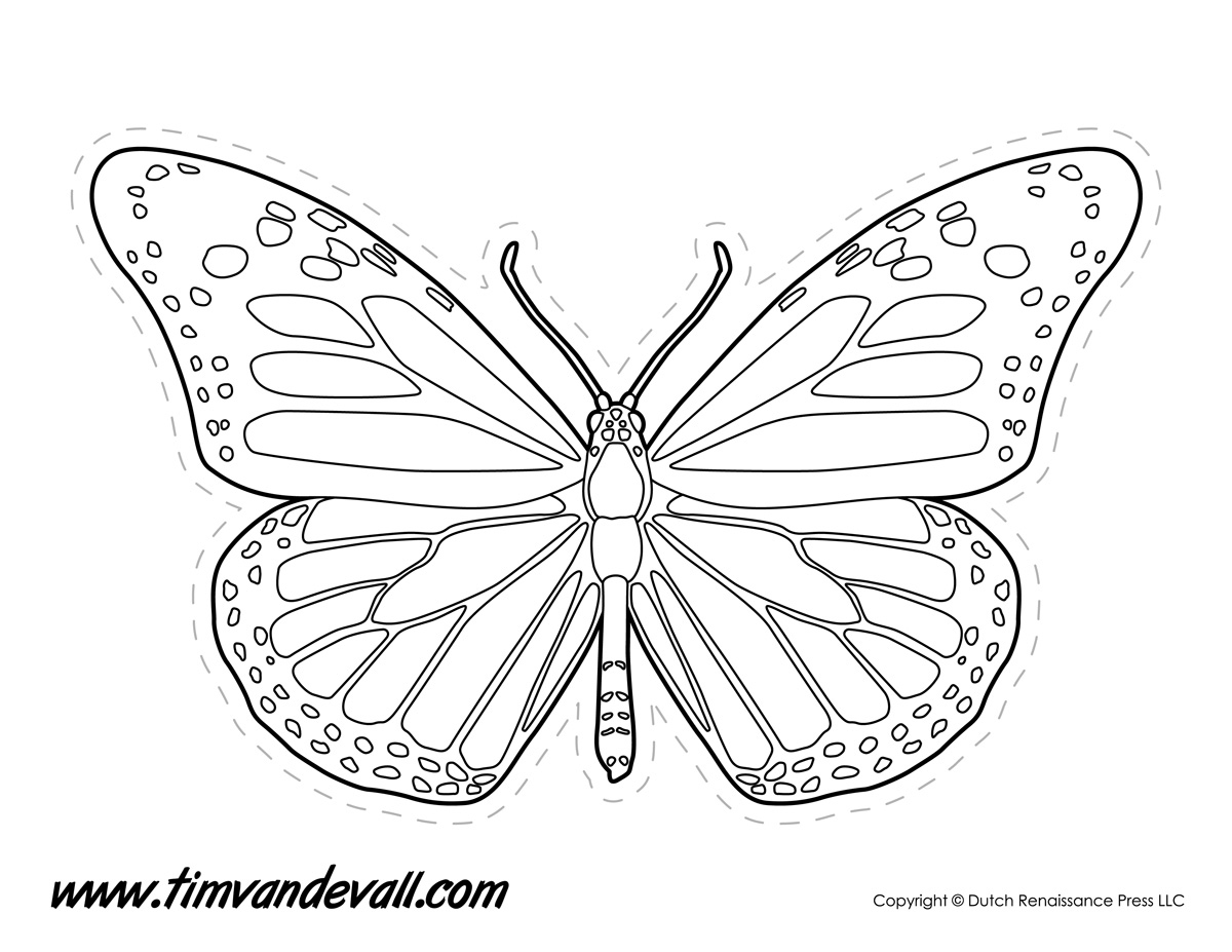 coloring outline butterfly clipart panda free clipart images coloring butterfly outline
