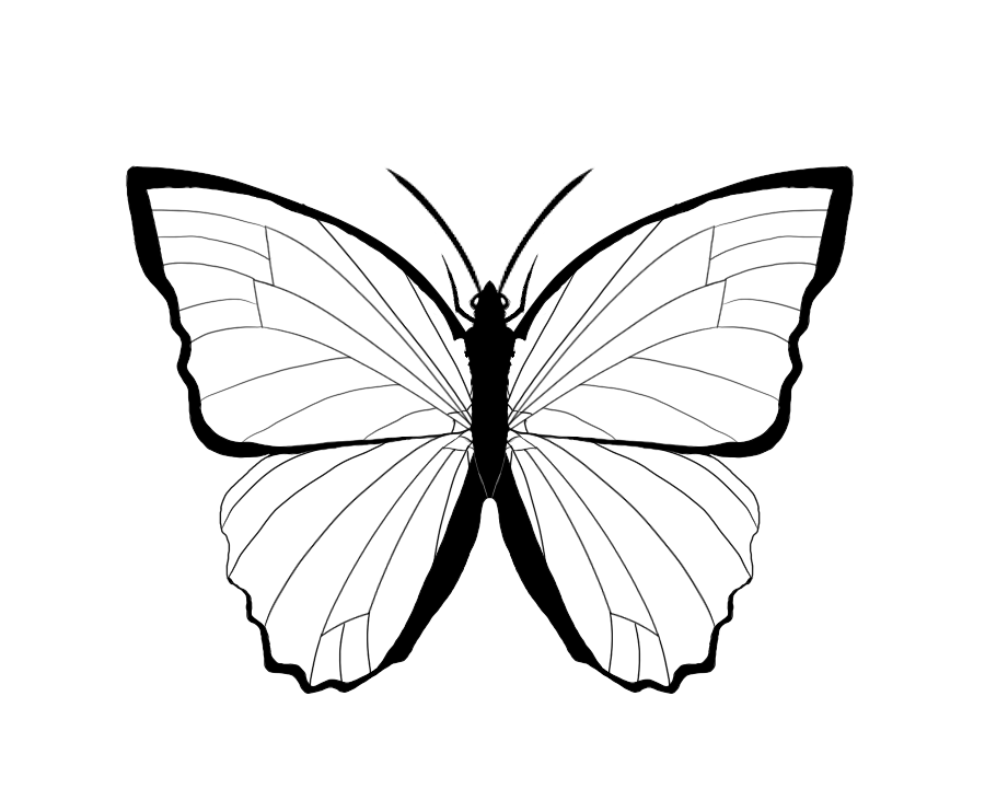 coloring outline butterfly dragonfly coloring pages for adults book colouring outline coloring butterfly