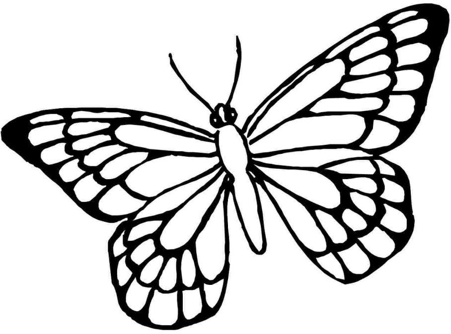 coloring outline butterfly monarch butterfly line drawing at paintingvalleycom outline coloring butterfly