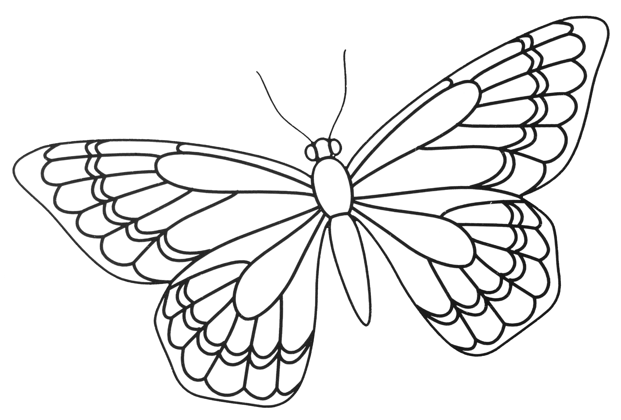 coloring outline butterfly outline of butterfly free download on clipartmag butterfly outline coloring