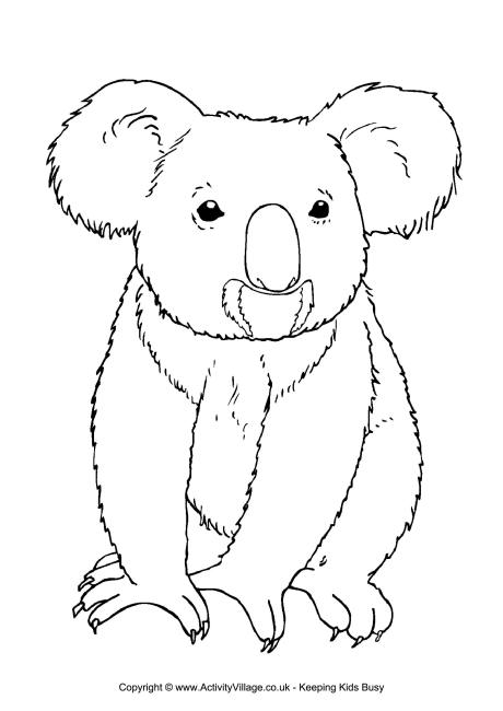 coloring outline pictures koala colouring page 3 outline pictures coloring