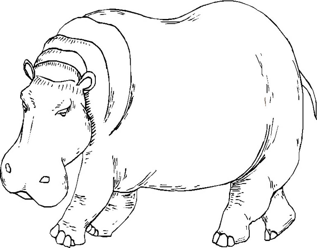 coloring page hippo free printable hippo coloring pages for kids hippo page coloring