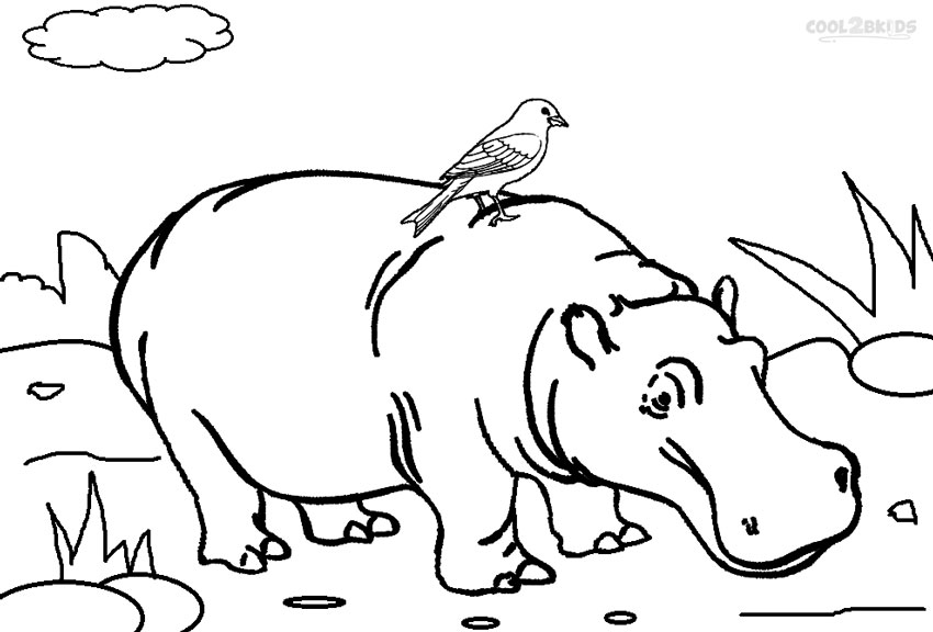 coloring page hippo printable hippo coloring pages for kids cool2bkids hippo coloring page