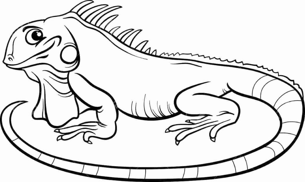 coloring page iguana 16 printable pictures of iguana page print color craft iguana page coloring