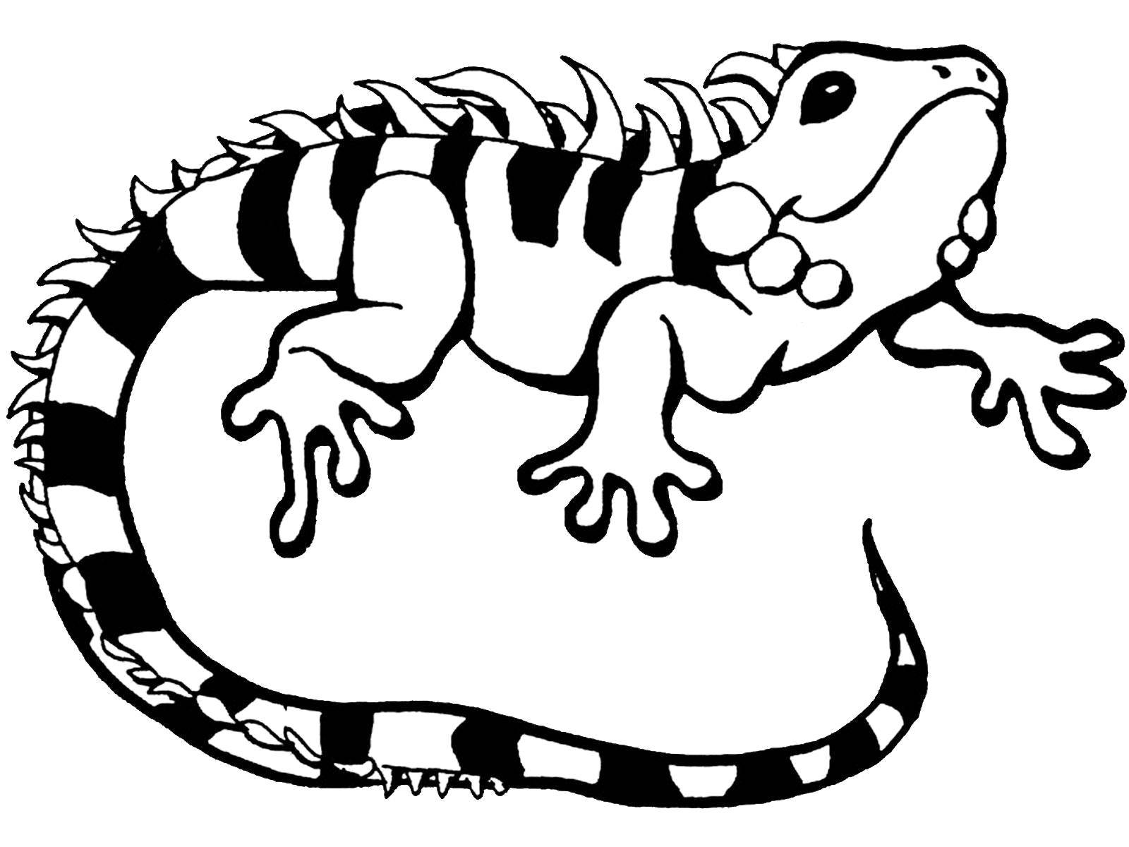 coloring page iguana free printable iguana coloring pages for kids iguana page coloring