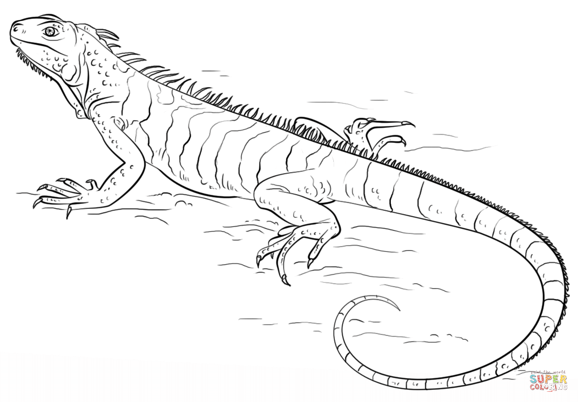coloring page iguana iguana coloring pages to download and print for free page coloring iguana