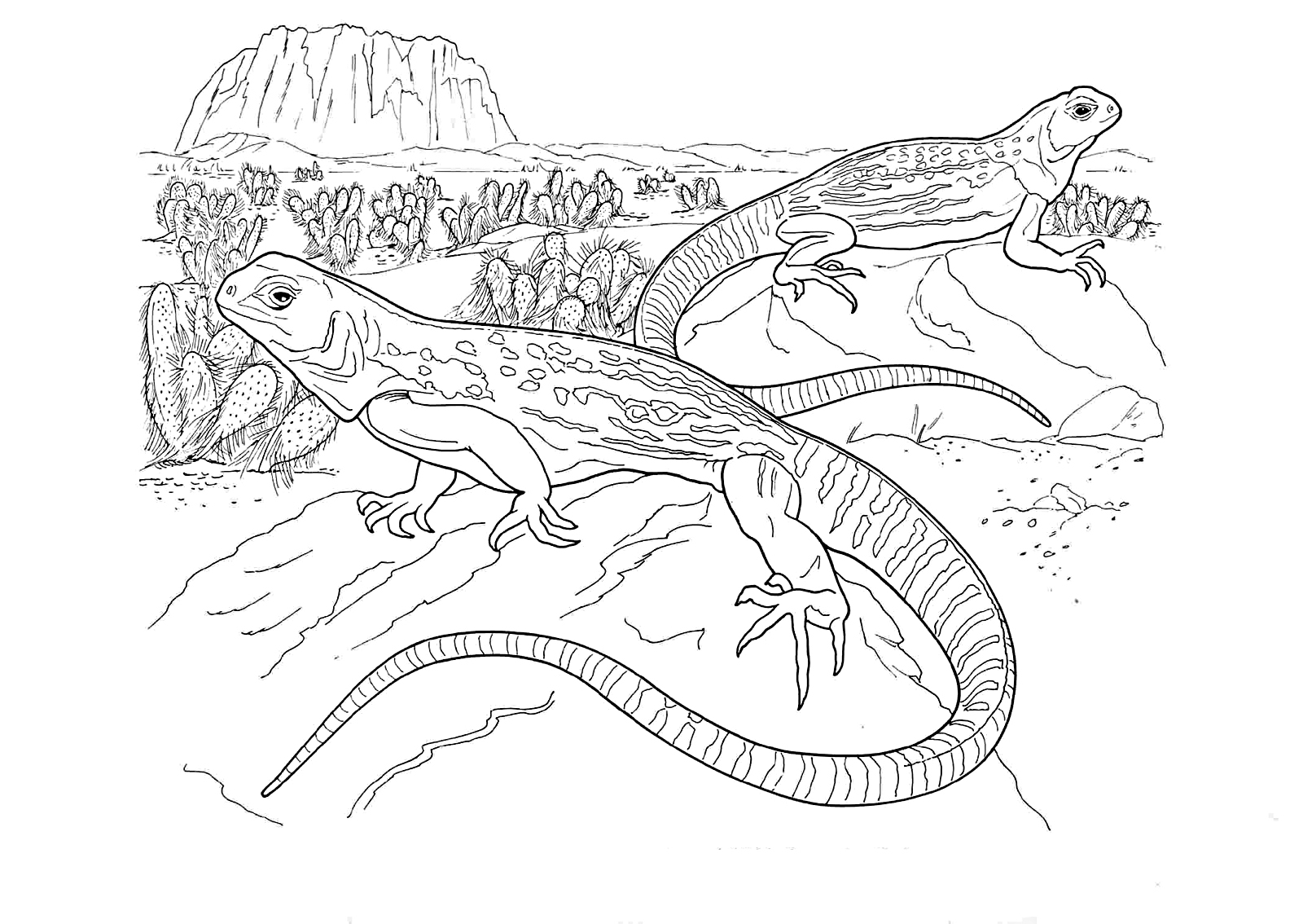 coloring page iguana iguana coloring pages to download and print for free page coloring iguana 1 1