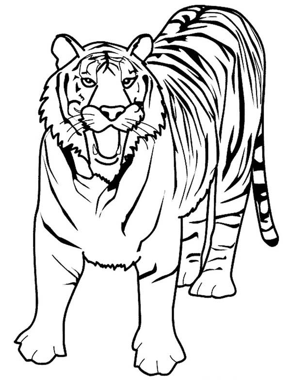 coloring page of tiger tiger coloring page free printable coloring pages of coloring tiger page