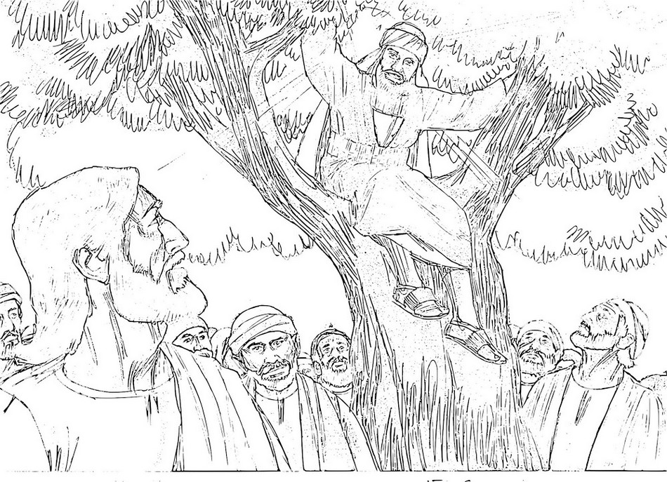coloring page zacchaeus tree 41 best images about bible jesus zacchaeus on pinterest tree zacchaeus page coloring
