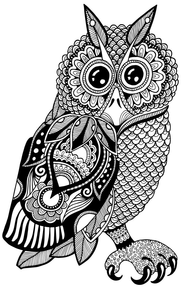 coloring pages for adults owls 680 best coloring owls images on pinterest coloring adults pages owls for