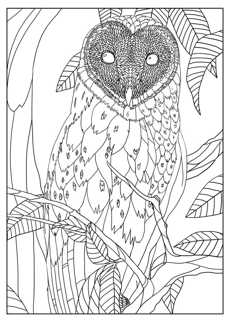 coloring pages for adults owls barn owl by mizu owls adult coloring pages owl pages coloring for owls adults