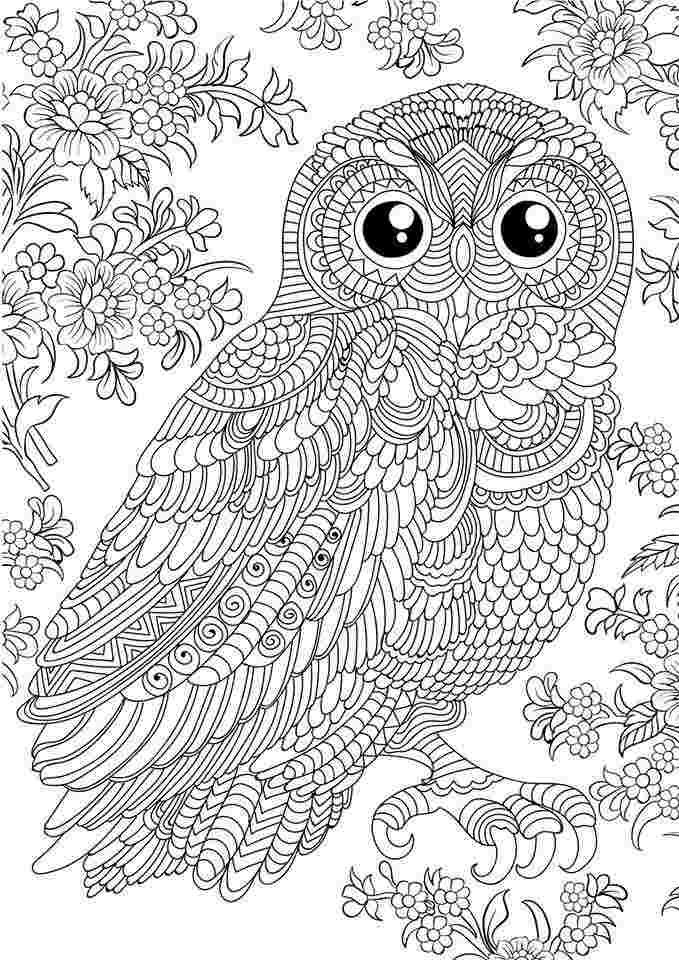 coloring pages for adults owls owl coloring pages for adults picture whitesbelfast adults for pages owls coloring