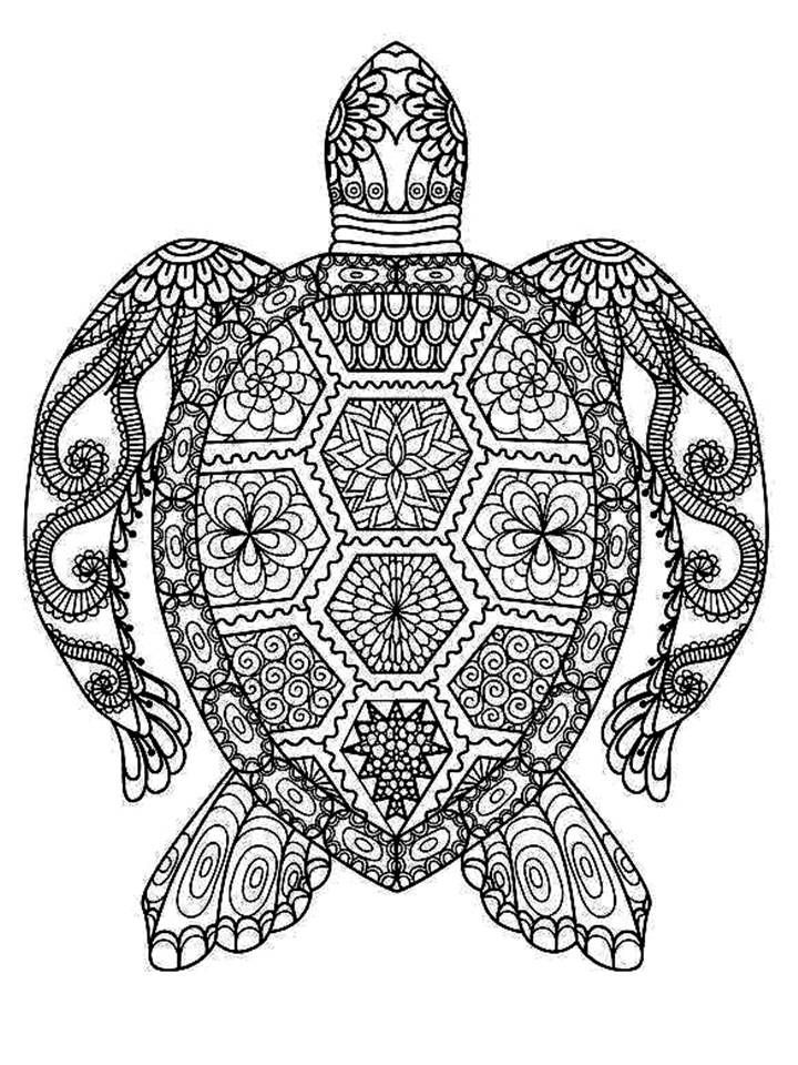 coloring pages for adults turtle adult coloring pages turtle coloring home coloring adults for turtle pages