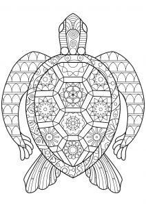 coloring pages for adults turtle coloring pages for adults turtle for coloring pages adults turtle
