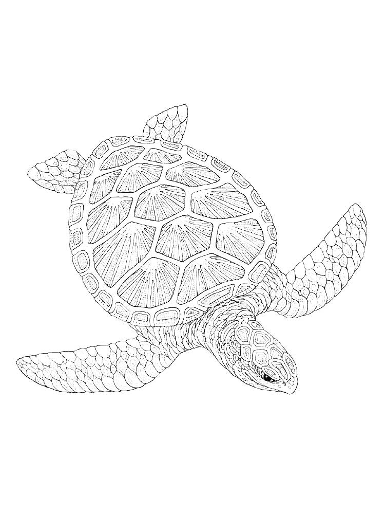 coloring pages for adults turtle sea turtle colored pencil tutorial lachri fine art for turtle adults coloring pages