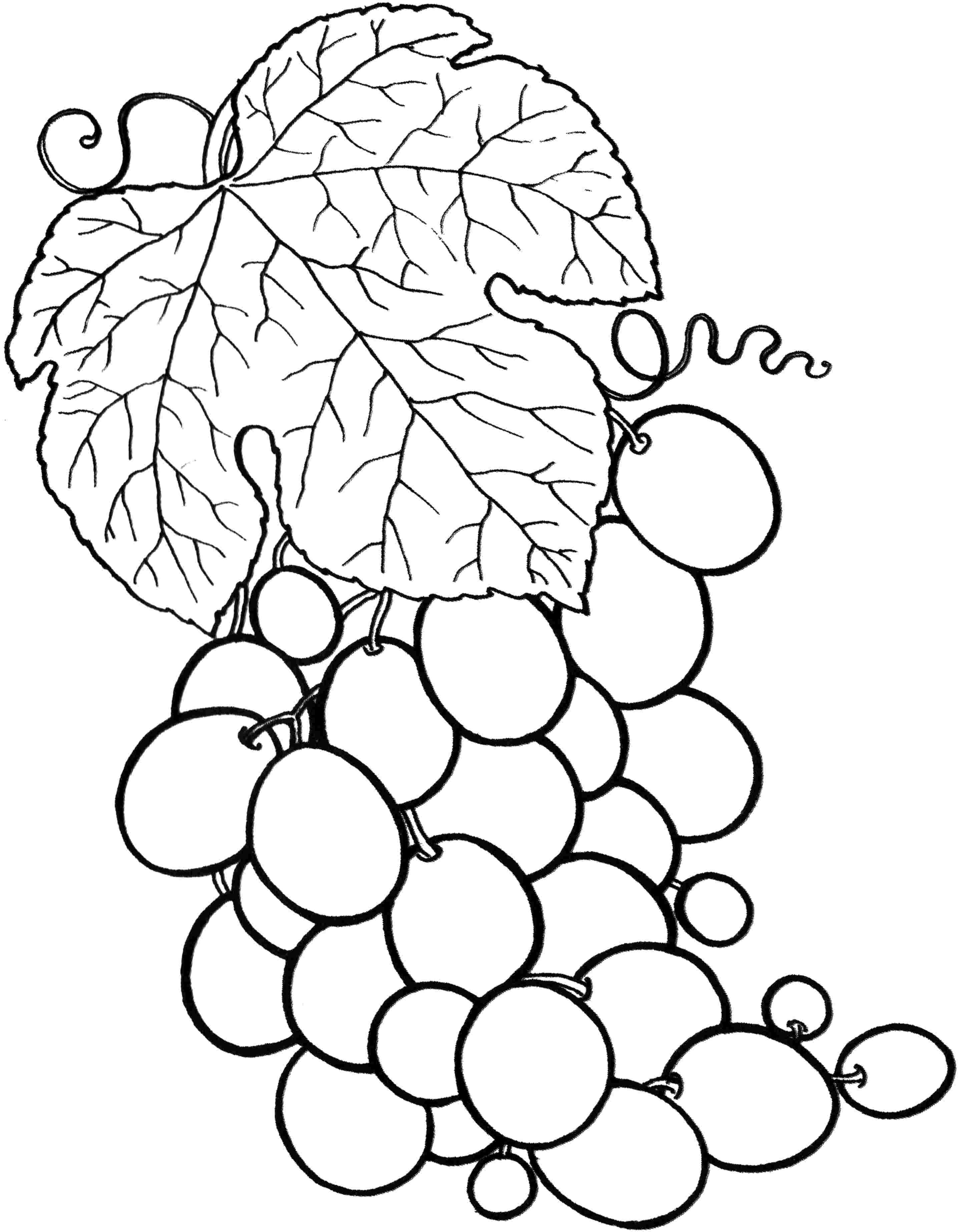 coloring pages fruit fruit coloring pages for childrens printable for free fruit pages coloring