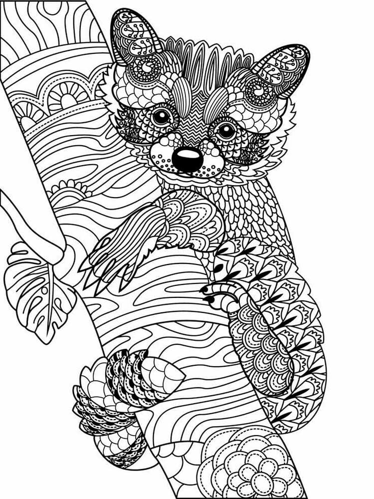 coloring pages of free raccoon coloring pages for adults printable to pages coloring of