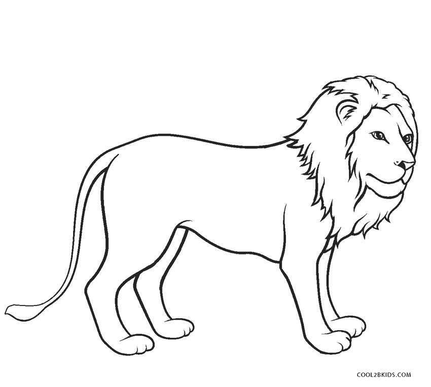 coloring pages of lion about lions lion of pages coloring