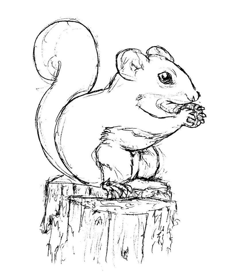 coloring pages of squirrels disney squirrel coloring page download print online squirrels coloring pages of