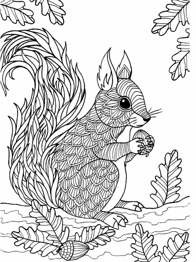 coloring pages of squirrels free printable squirrel coloring pages for kids animal place coloring squirrels pages of