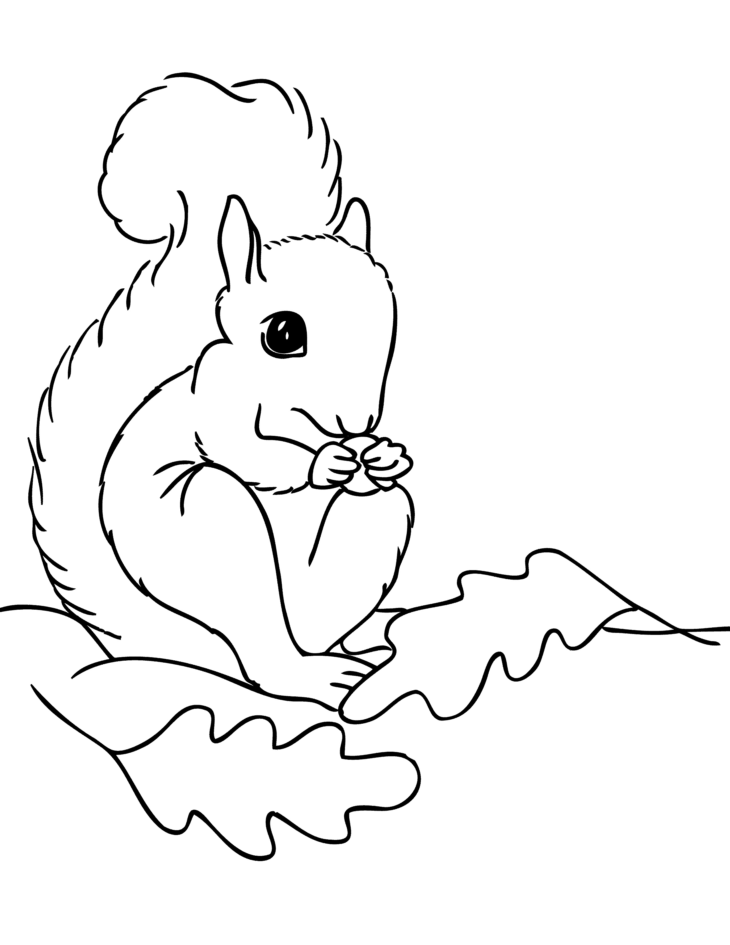 coloring pages of squirrels free squirrel coloring pages pages coloring squirrels of
