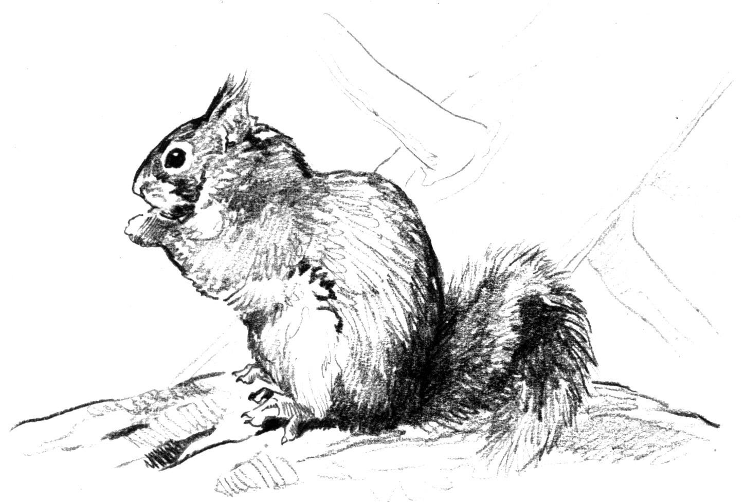coloring pages of squirrels squirrel coloring pages of pages squirrels coloring