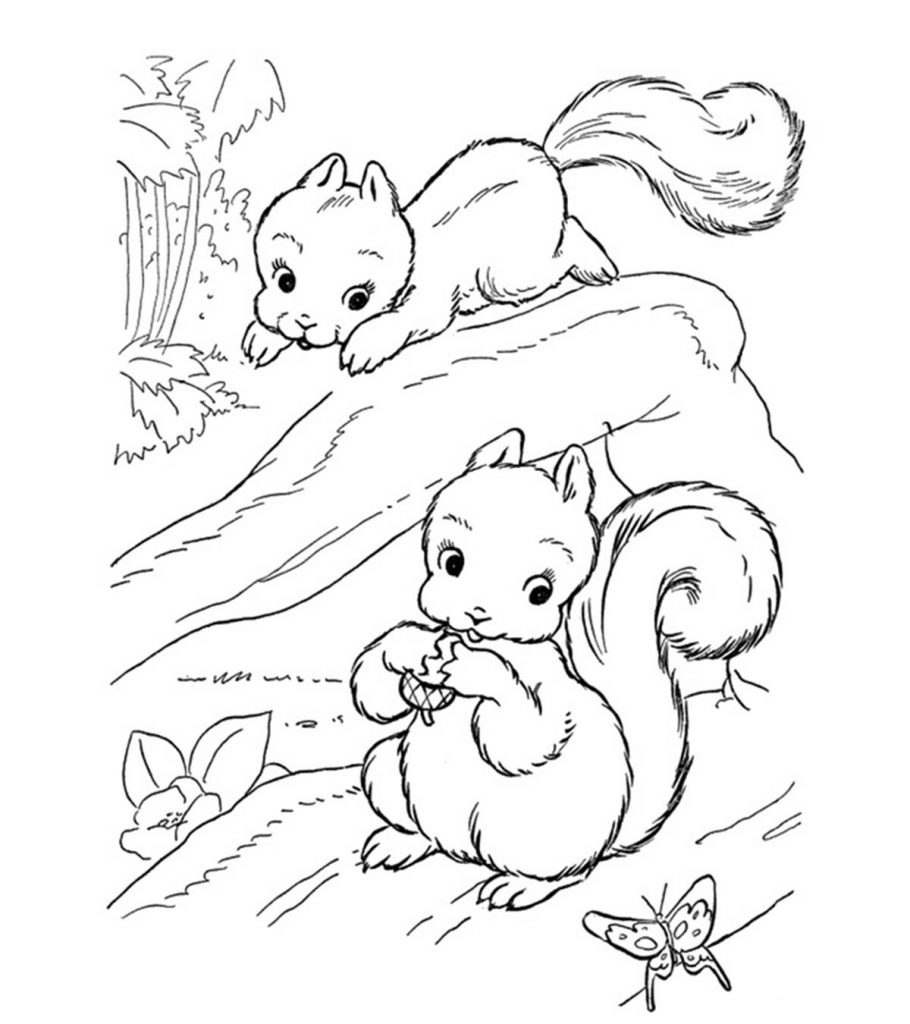 coloring pages of squirrels squirrels little cute squirrel coloring page pages coloring squirrels of