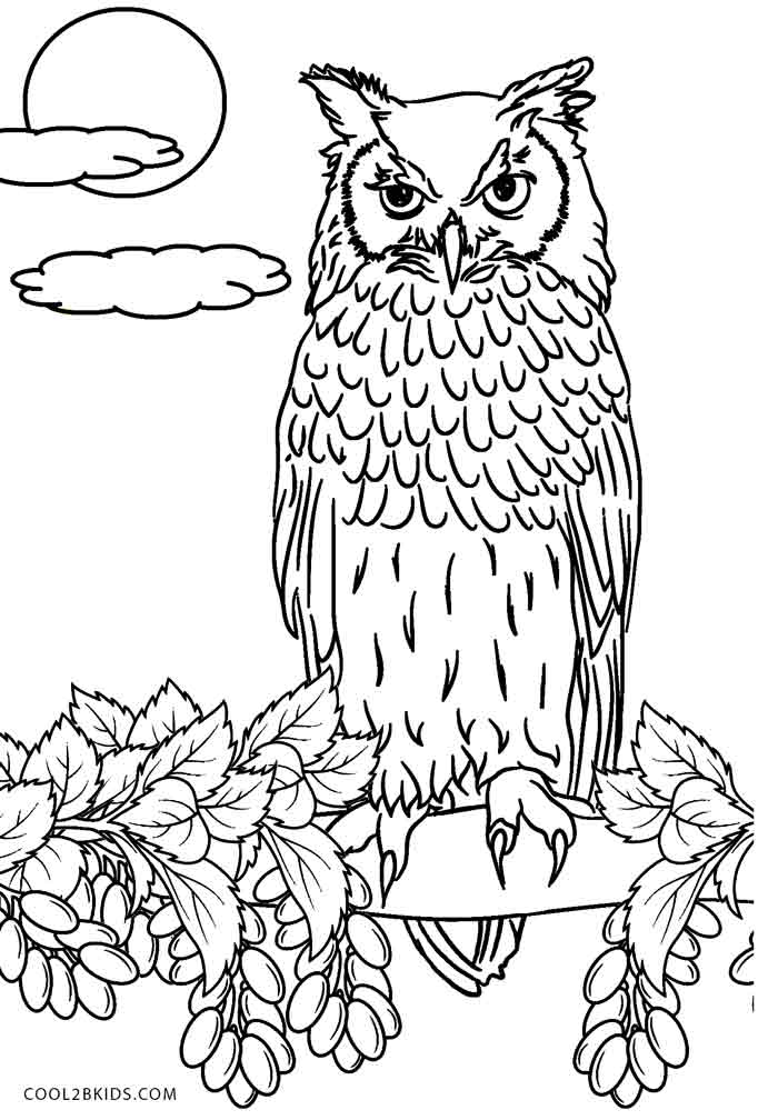 coloring pages owls free printable owl coloring pages for kids cool2bkids owls coloring pages