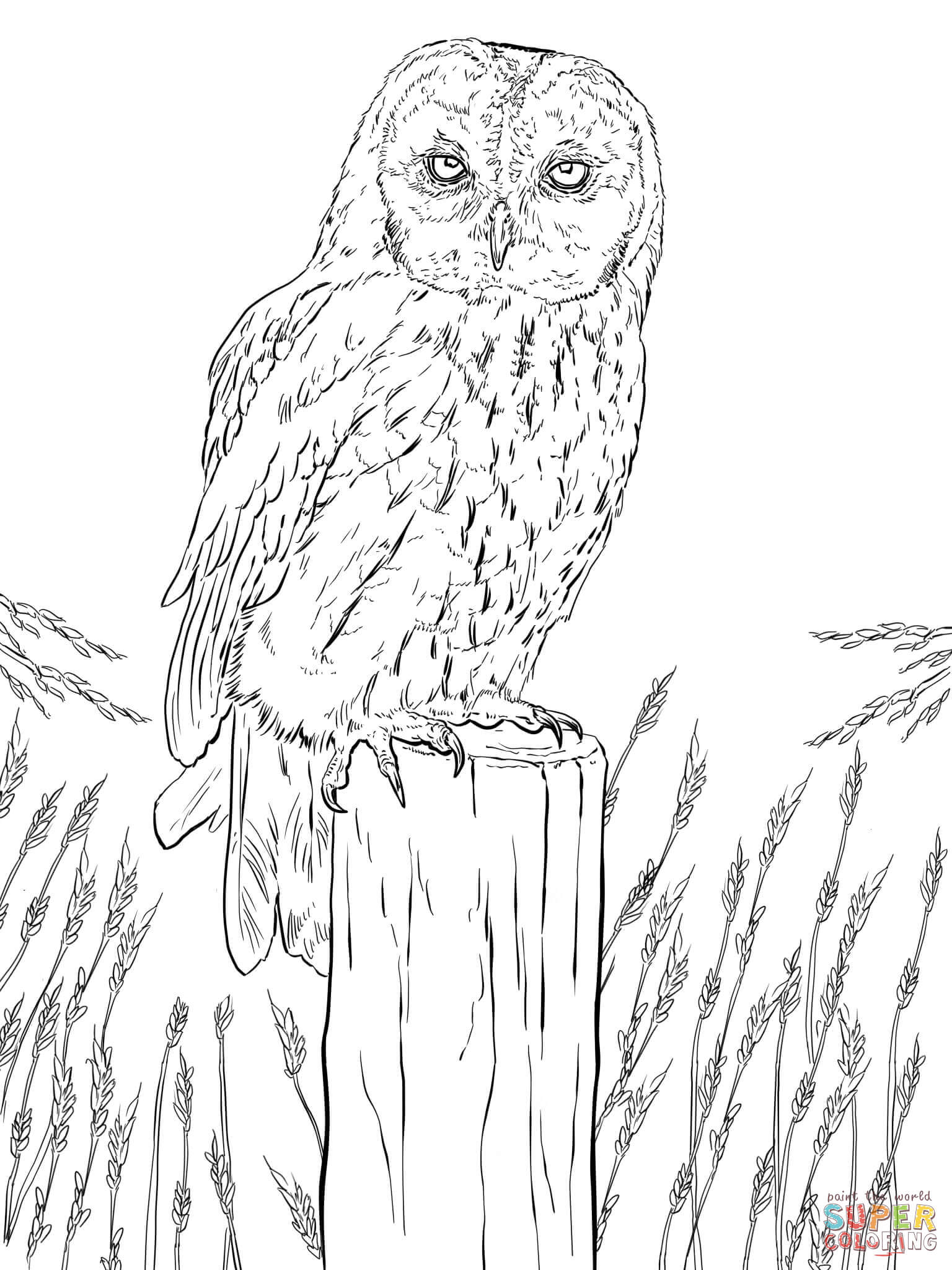 coloring pages owls tawny owl coloring page free printable coloring pages coloring pages owls