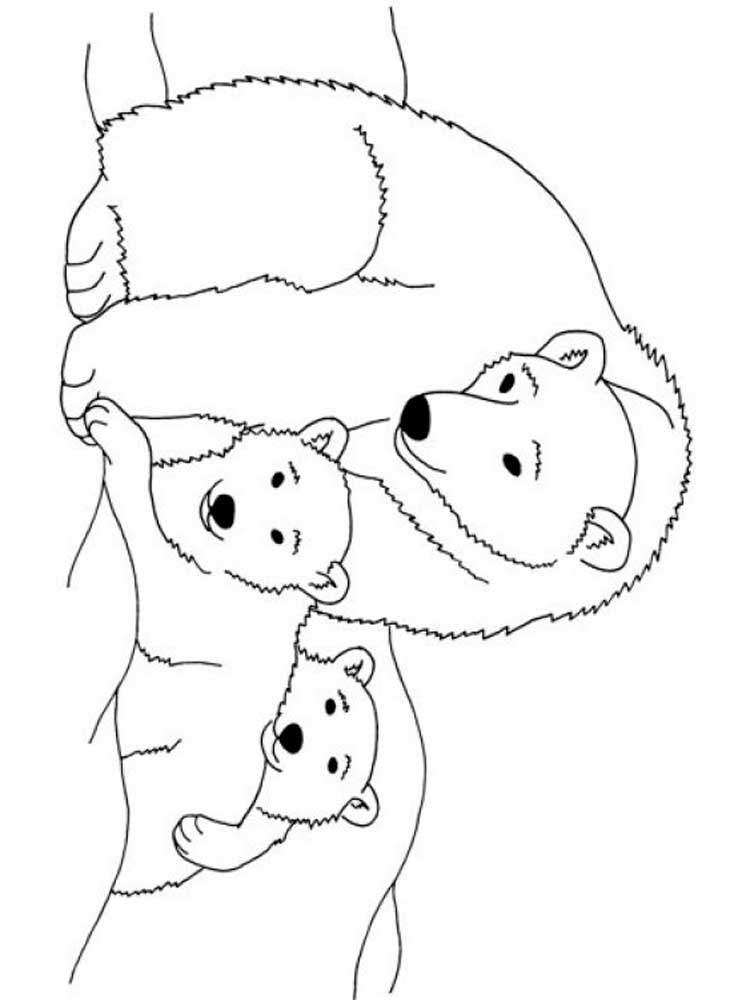coloring pages polar bear polar bear on thick ice coloring page kids play color bear coloring polar pages
