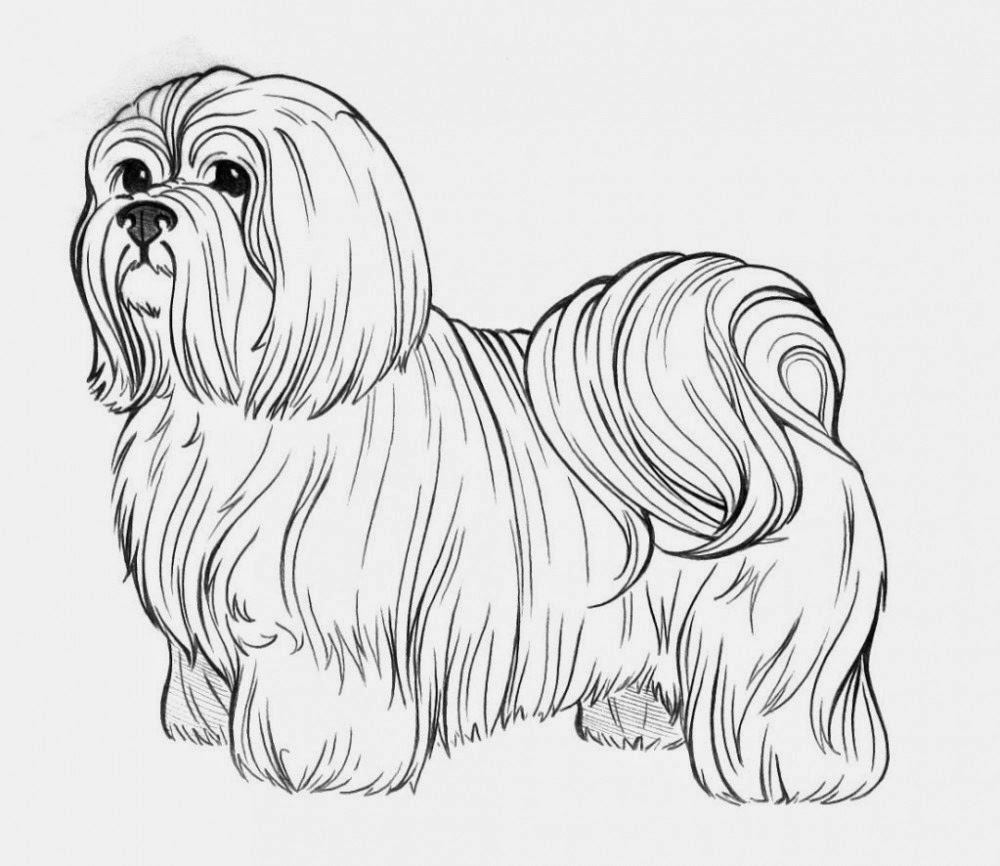 coloring pages to print dogs puppy dog pals coloring pages coloring pages for kids dogs pages coloring to print