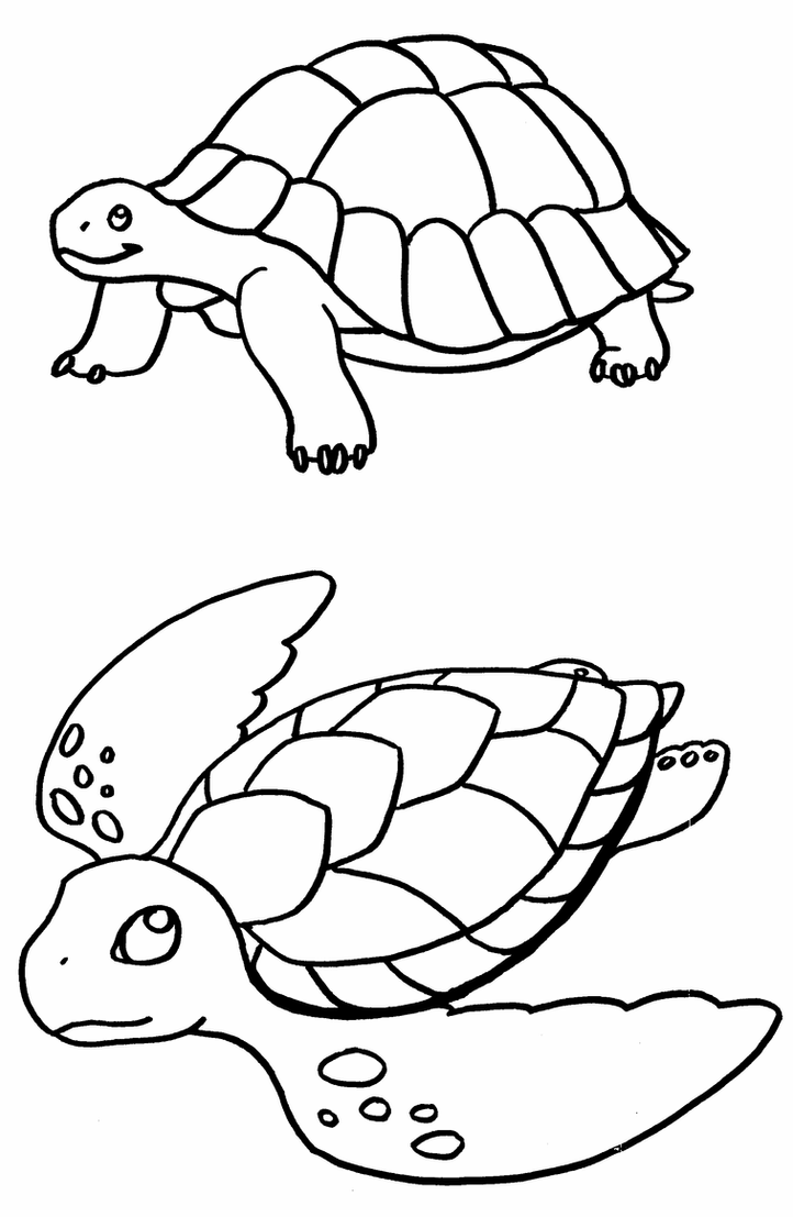 coloring pages turtle sea turtle line drawing at getdrawings free download turtle coloring pages
