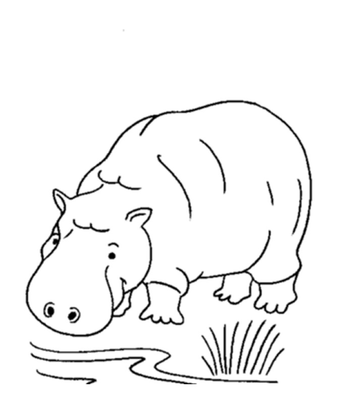 coloring picture hippo hippo coloring pages download hippo coloring picture